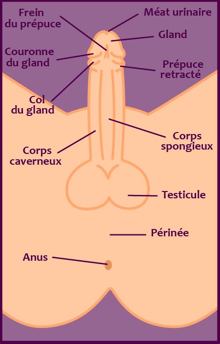 sexe_homme_externe